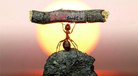 Война муравьям в отдельно взятой квартире!